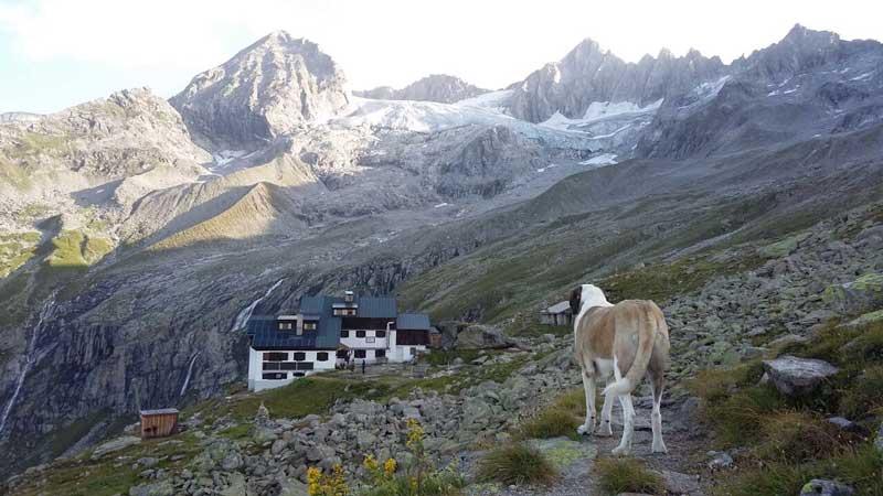Der Hüttenhund SUPERWILDVISION – Alpen © Irene Müller