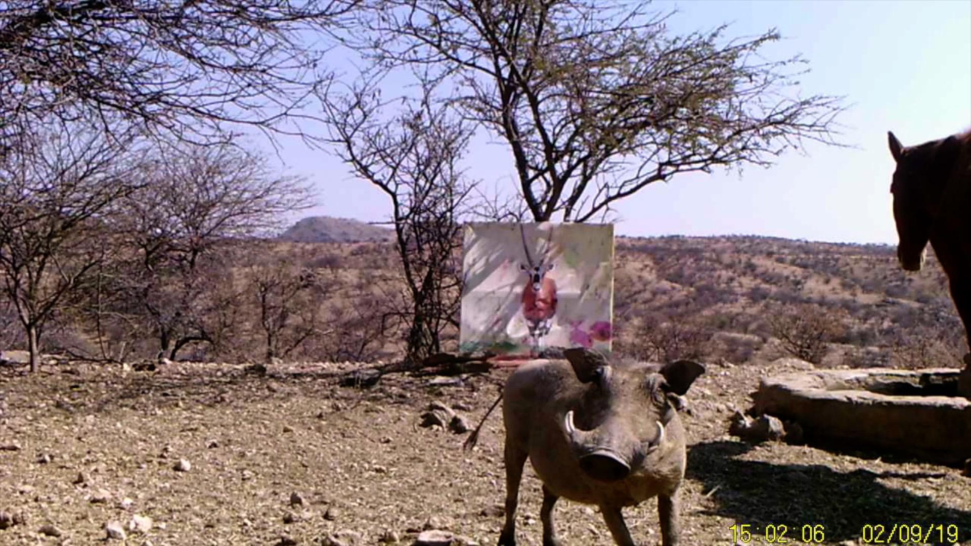 Filmstill SUPERWILDVISION Namibia 2019, Afrika, Kunstprojekt von Irene Mueller, Pferd, Warzenschwein schaut her, Gemaelde Antilope