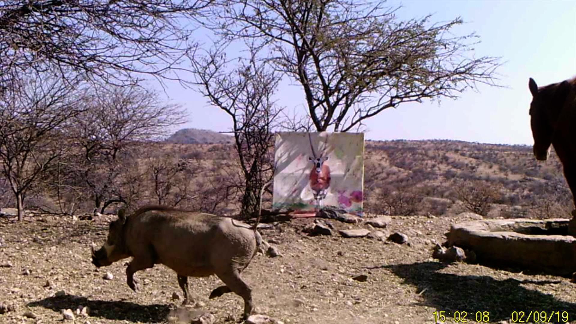 Filmstill SUPERWILDVISION Namibia 2019, Afrika, Kunstprojekt von Irene Mueller, Pferd, Warzenschwein rennt, Gemaelde Antilope
