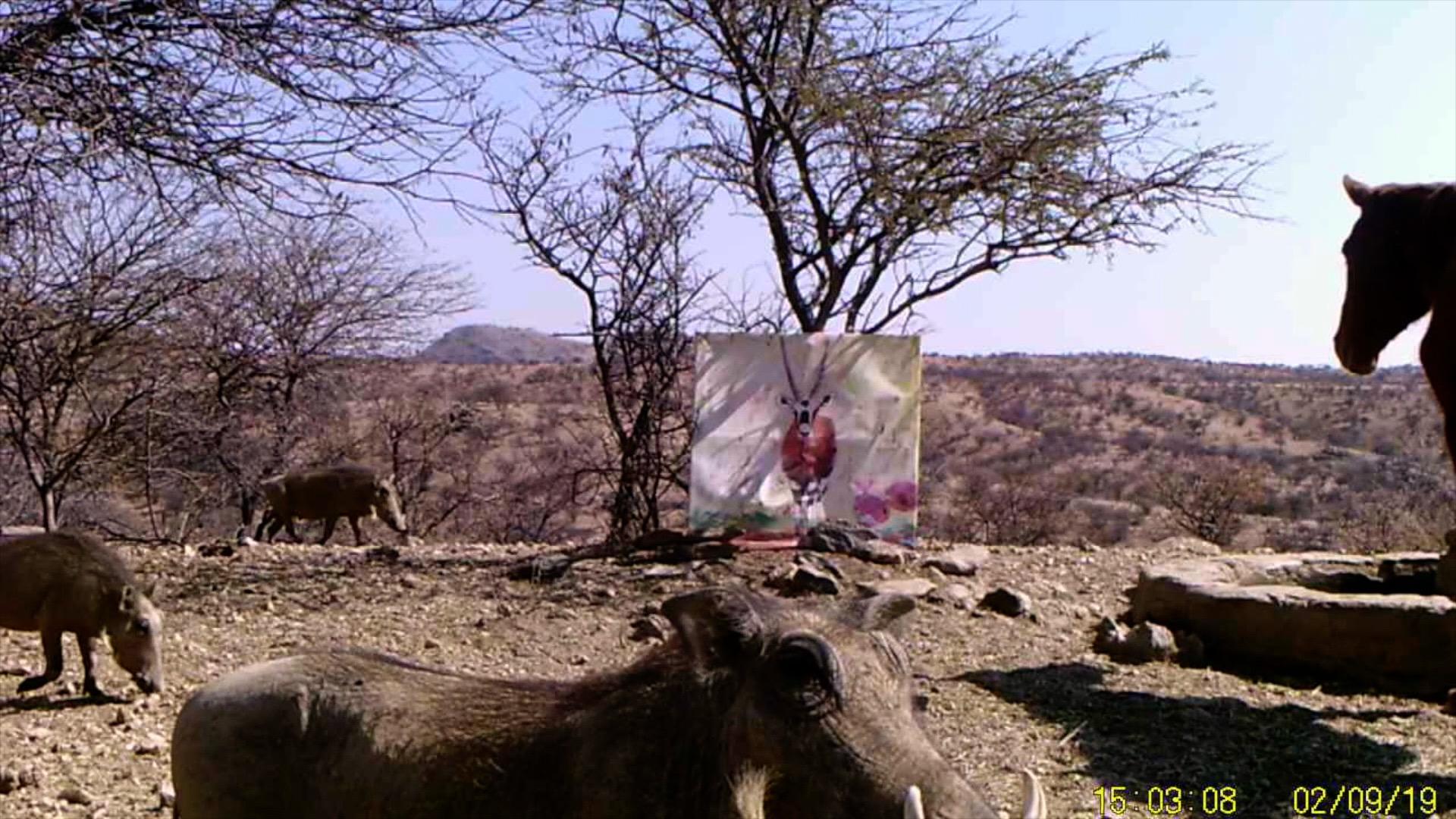 Filmstill SUPERWILDVISION Namibia 2019, Afrika, Kunstprojekt von Irene Mueller, Pferd und Warzenschweine, Gemaelde Antilope