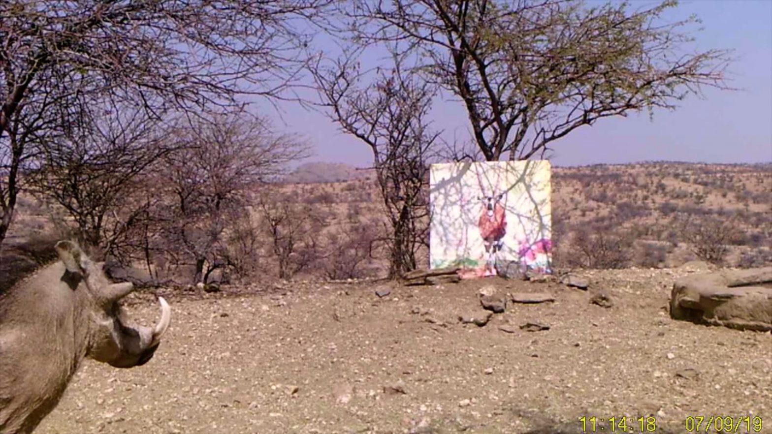 Filmstill SUPERWILDVISION Namibia 2019, Afrika, Nachtaufnahme Kunstprojekt von Irene Mueller, Warzenschwein betrachtet Gemaelde Antilope