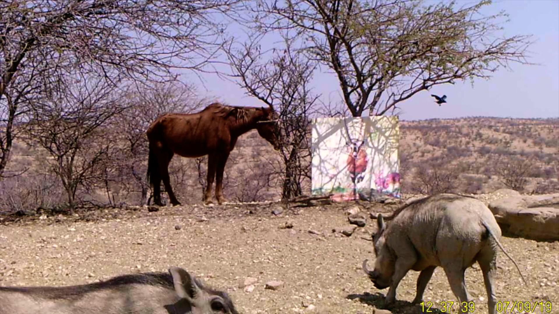 Filmstill SUPERWILDVISION Namibia 2019, Afrika, Nachtaufnahme Kunstprojekt von Irene Mueller, Pferd und Warzenschweine Gemaelde Antilope