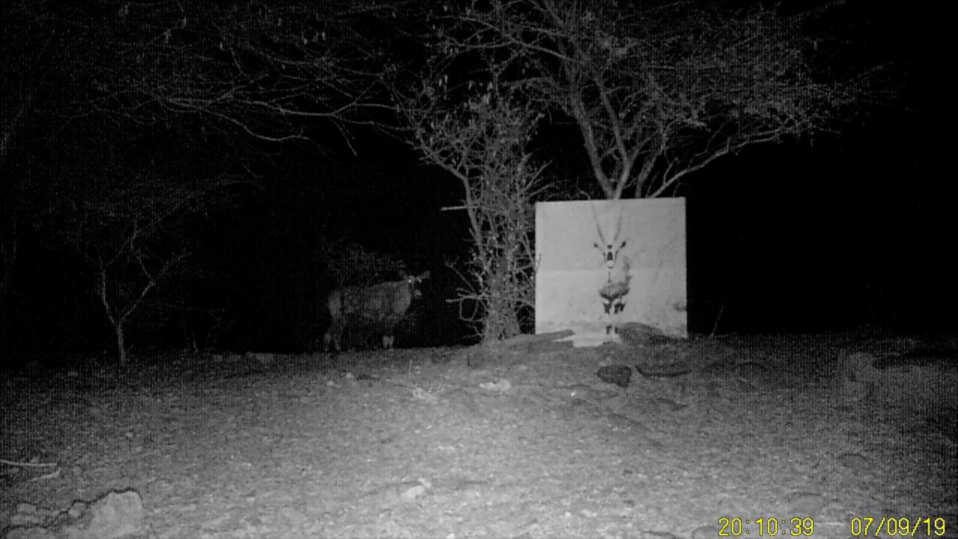 Filmstill SUPERWILDVISION Namibia 2019, Afrika, Kunstprojekt von Irene Mueller, Antilope steht bei Gemaelde