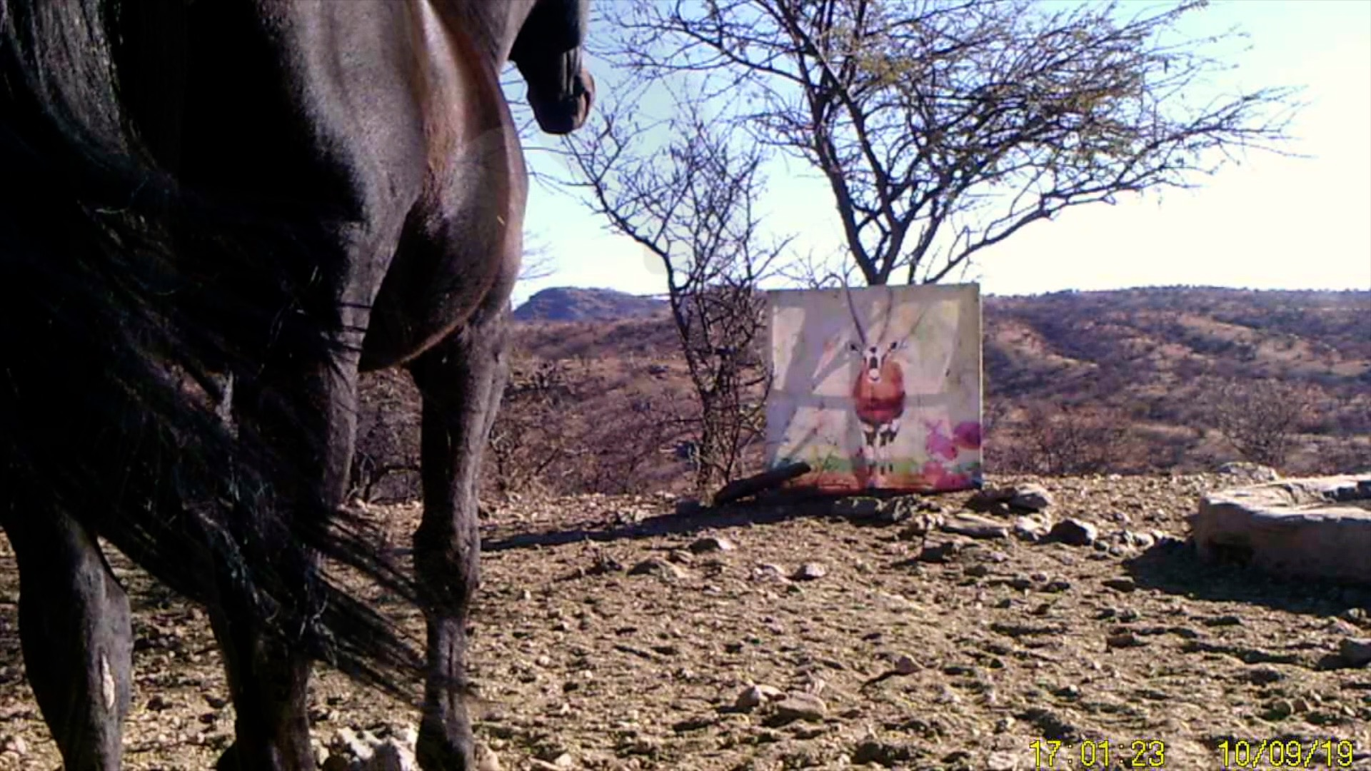 Filmstill SUPERWILDVISION Namibia 2019, Afrika, Kunstprojekt von Irene Mueller, Pferd betrachtet Gemaelde