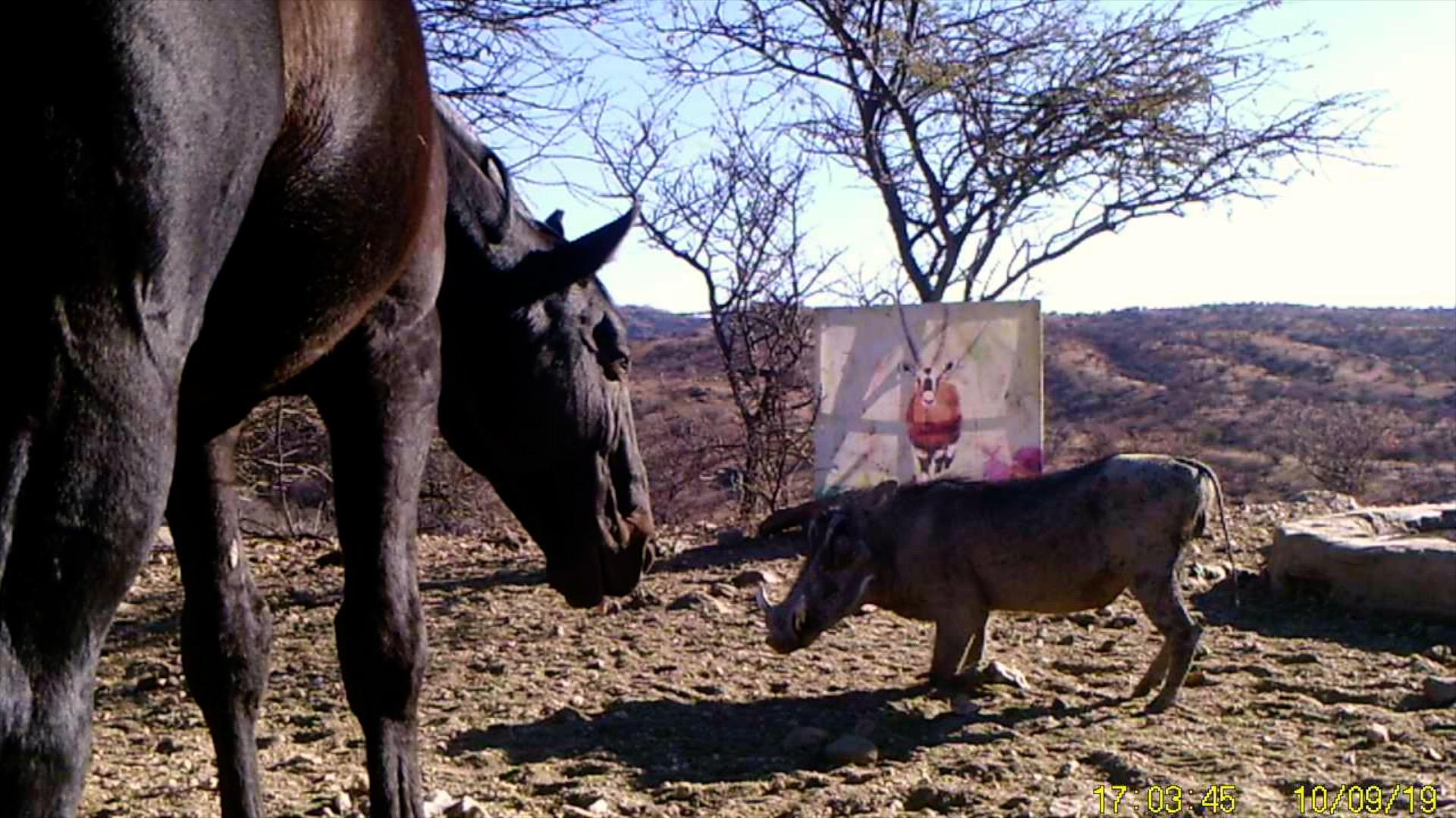 Filmstill SUPERWILDVISION Namibia 2019, Afrika, Kunstprojekt von Irene Mueller, Pferd und Warzenschwein mit Gemaelde