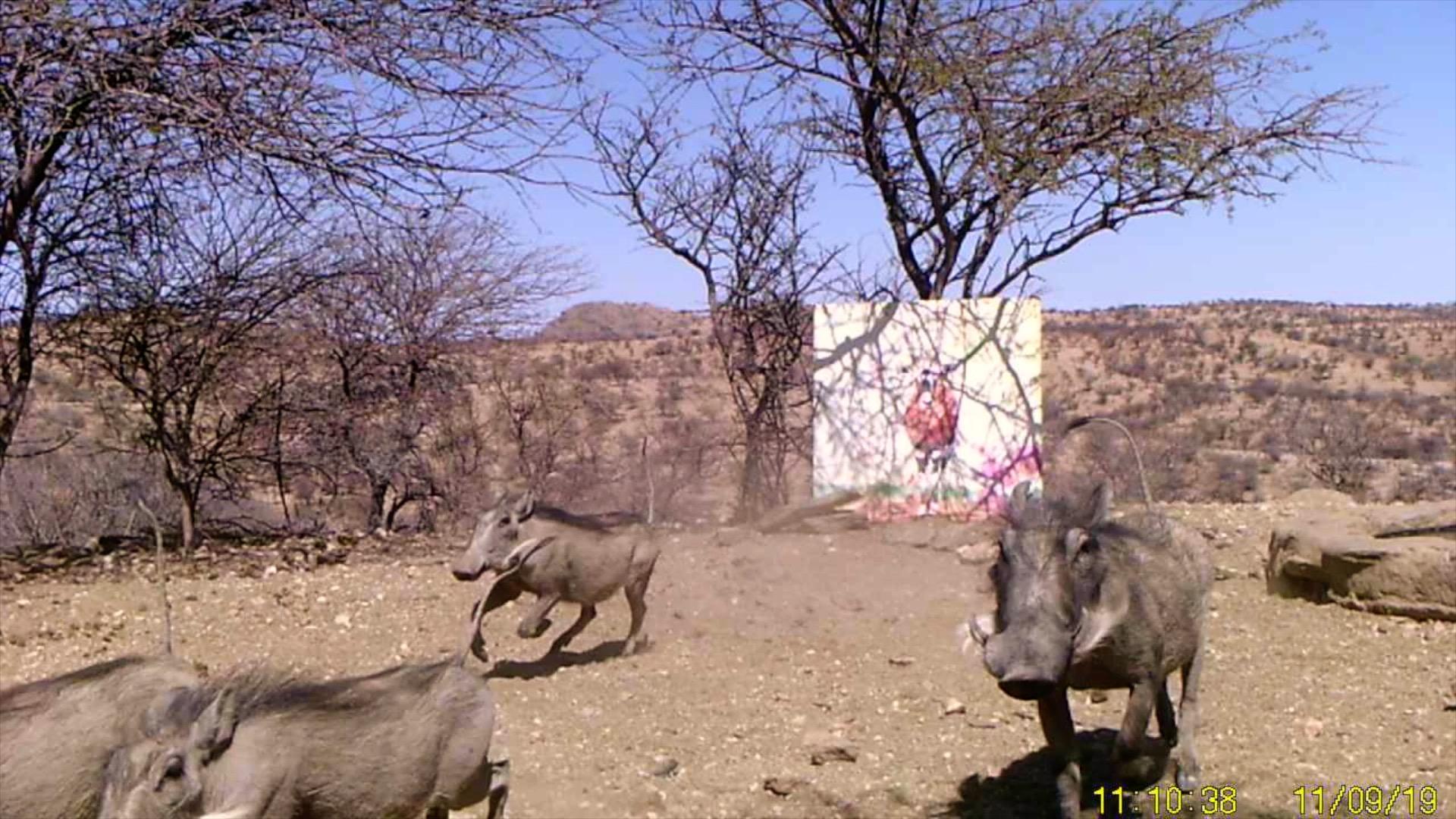 Filmstill SUPERWILDVISION Namibia 2019, Afrika, Kunstprojekt von Irene Mueller, Warzenschweine mit Gemaelde, Galopp
