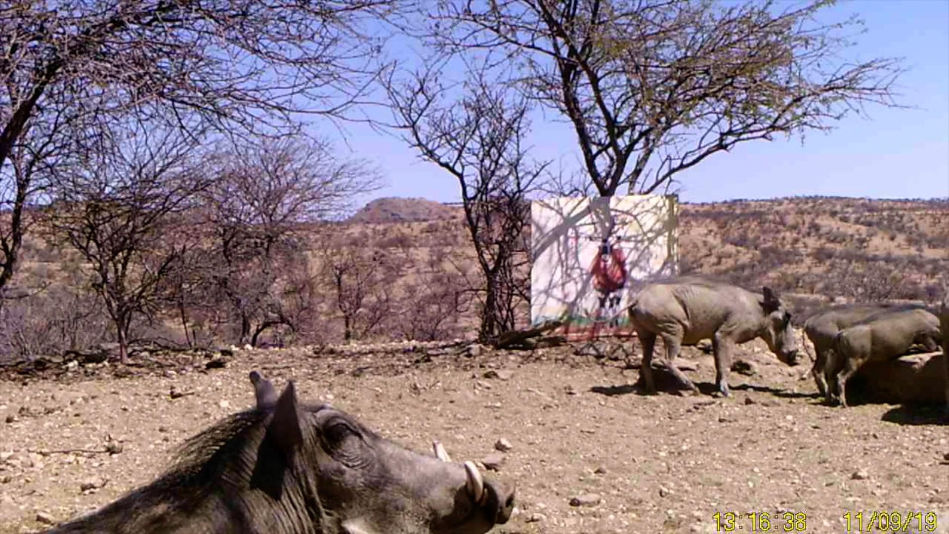 Filmstill SUPERWILDVISION Namibia 2019, Afrika, Kunstprojekt von Irene Mueller, Warzenschweine mit Gemaelde