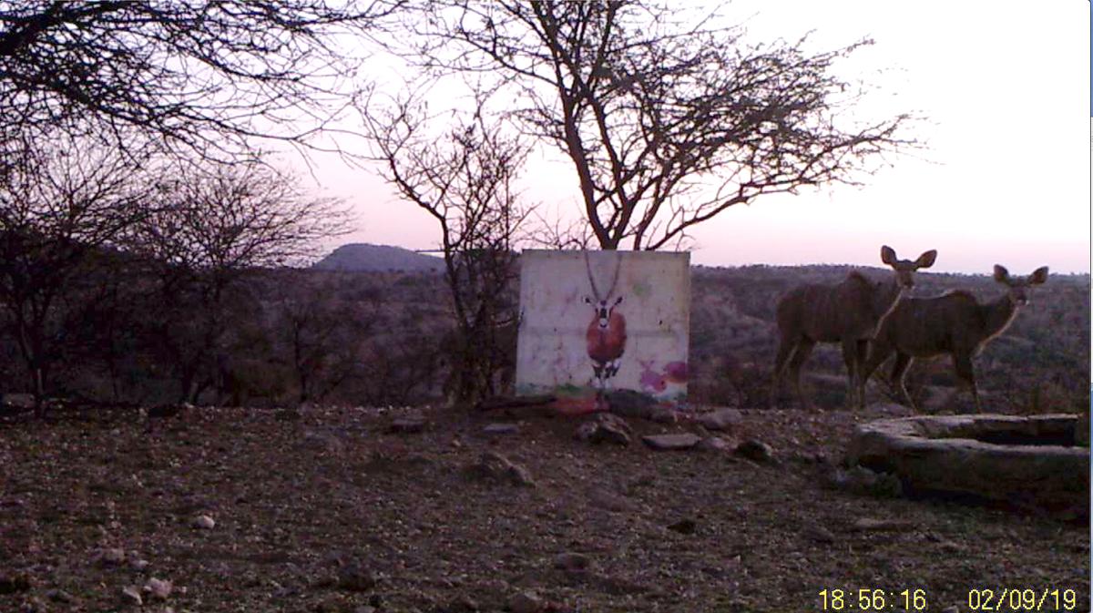 Filmstill SUPERWILDVISION Namibia 2019, Afrika, Kunstprojekt von Irene Mueller, zwei Kudus stehen neben Gemaelde Antilope