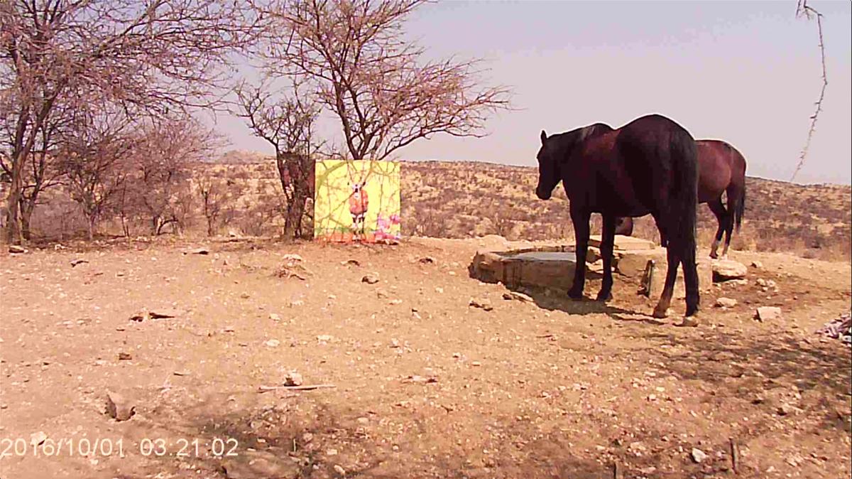 Filmstill SUPERWILDVISION Namibia 2019, Afrika, Kunstprojekt von Irene Mueller, Pferd betrachtet Gemaelde Antilope