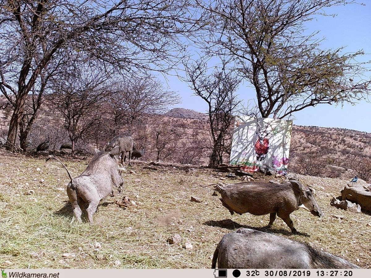 Filmstill SUPERWILDVISION Namibia 2019, Afrika, Kunstprojekt von Irene Mueller, Pferd, Warzenschweine hopsen, Gemaelde Antilope